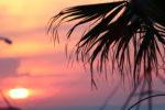 schmales Regal - Palme - Sonnenuntergang